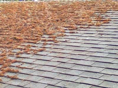 clean your roof - Roof Cleaning