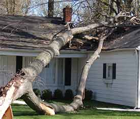 fallen tree damaging roof